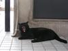 cat000131